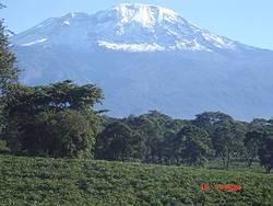 Kilamanjaro